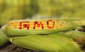 những thực phẩm biến đổi gen